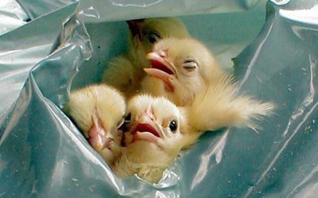 12 حقیقت درباره تخم مرغ که صنعت نمی خواهد شما بدانید