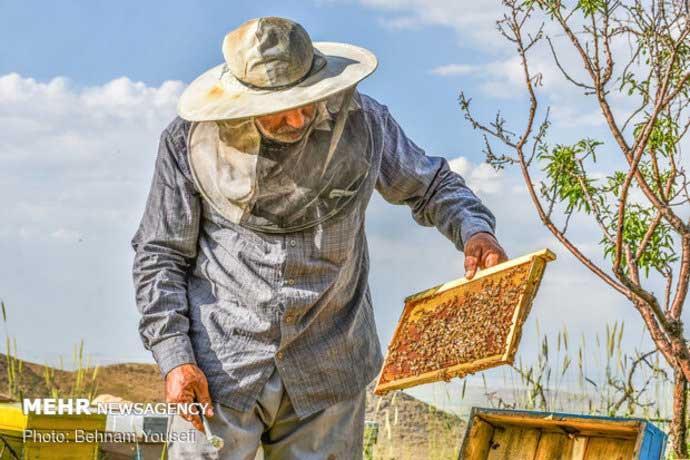 سرکشی کندوهای عسل