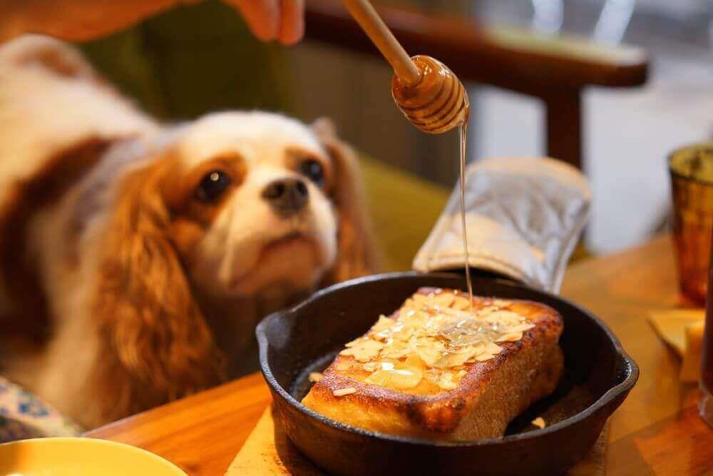 5 فایده عسل برای سگ ها