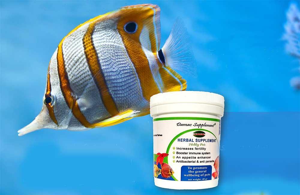 مکمل تقویتی ماهیان زینتی داماک
