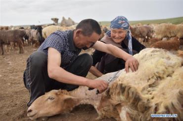 خصوصیات گوسفند آلتای