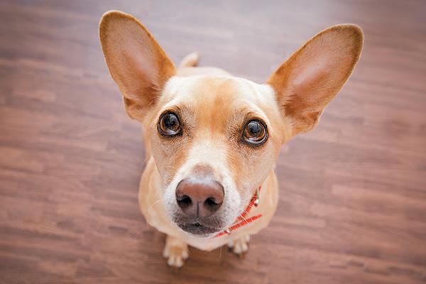 29 حقیقت جالب درباره سگ ها