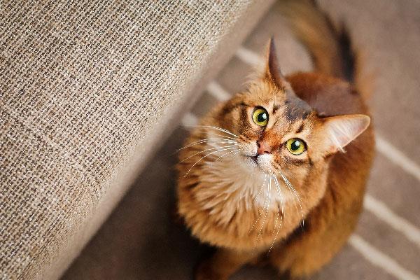 20 حقیقت جالب درمورد گربه ها