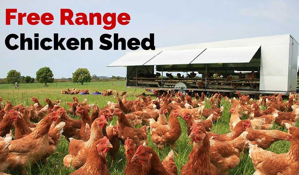 مشکلات آسایشی مرغهای تخمگذار