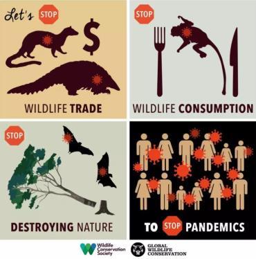 تجارت جهانی حیاتوحش در مرکز توجه قرار گرفت