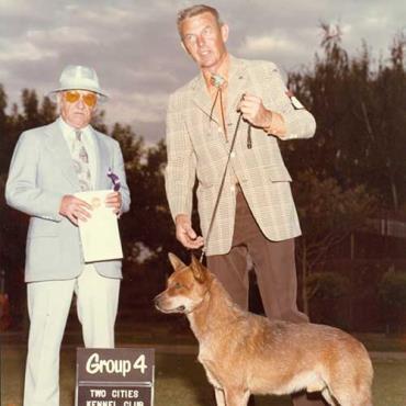 تاریخچه سگ گله استرالیایی
