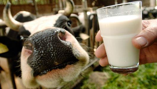 درجه بندی شیر خام بر اساس میکروب های موجود در آن