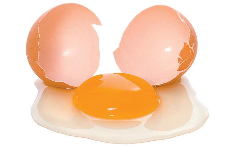 تشکیل تخم مرغ، هنر شگفت انگیز طبیعت