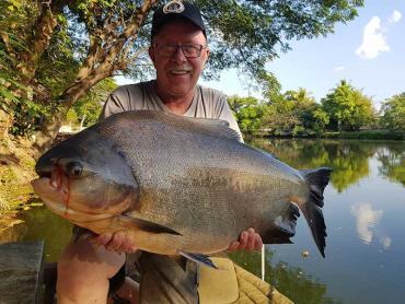 اندازه ماهی پاکو