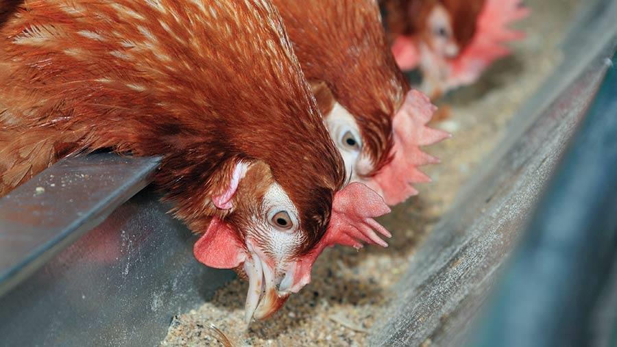 کاهش هزینه های خوراک با استفاده از آنزیم