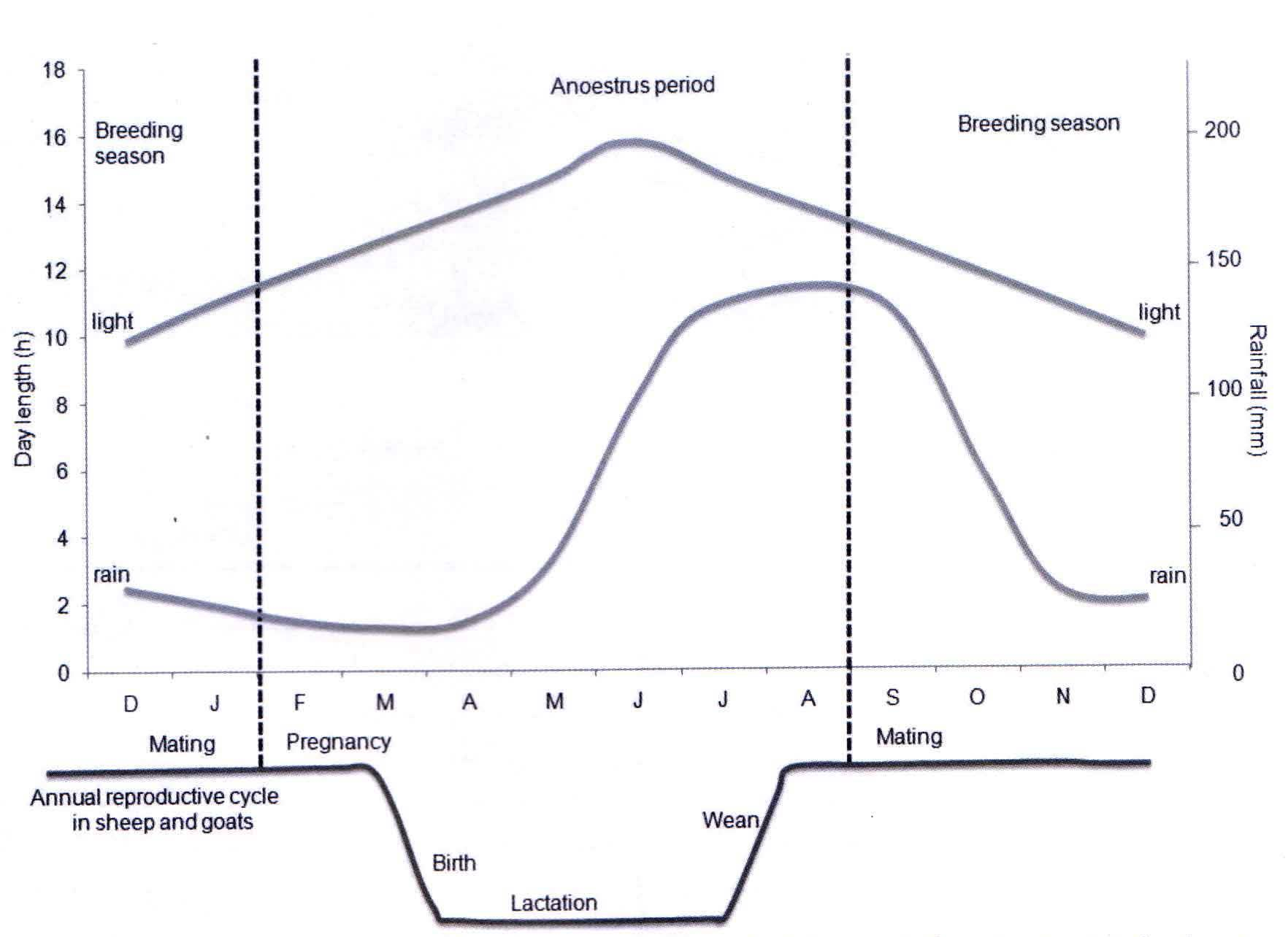 مدل سیکل تولیدمثلی فصلی در گوسفند و بز
