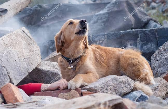 سگ های قهرمان