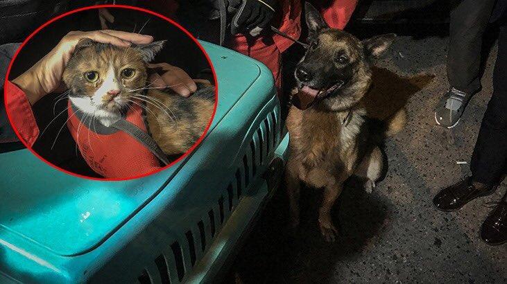 سگ نجات دهنده گربه
