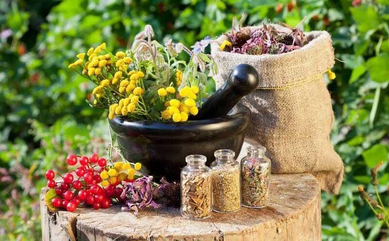 گیاه درمانی در دامپزشکی