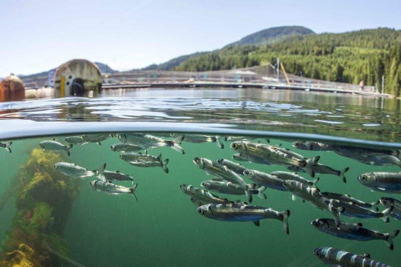 روش های افزايش توليد در واحد سطح مزارع پرورش ماهی