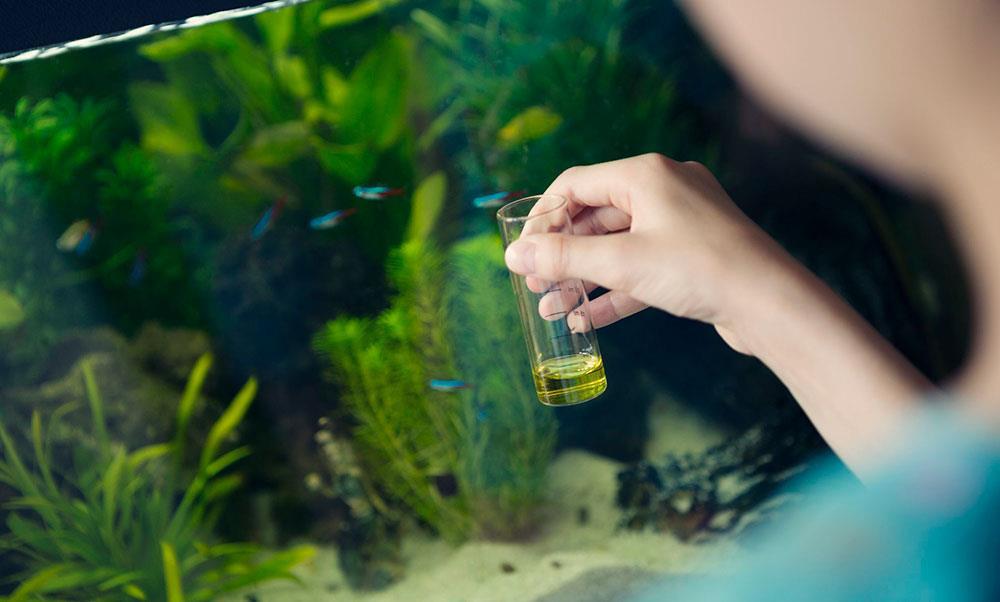 ماهیان آکواریومی به چه کیفیت آبی نیاز دارند؟