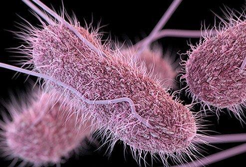 سوالاتی در ارتباط با بیماری سالمونلای طیور