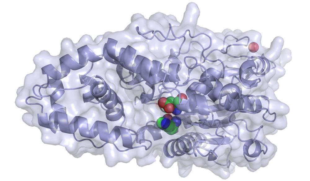 تفاوت عملکرد آنزیم های فیتاز در جذب عناصر معدنی