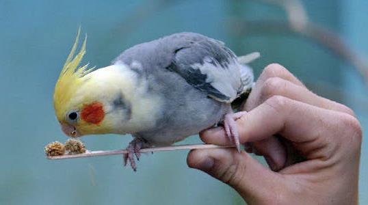 دستی کردن پرنده ترسیده