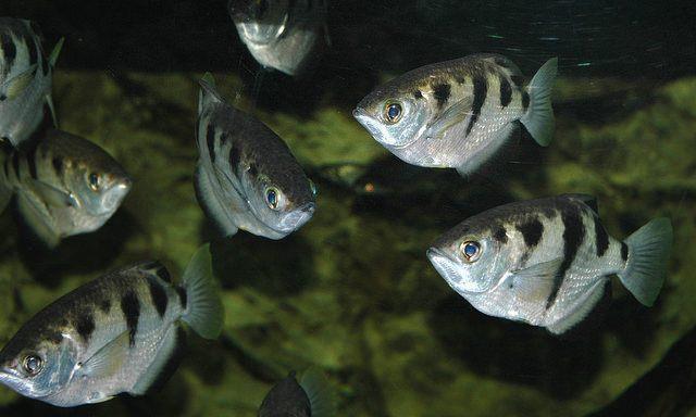 ماهیان آب شور