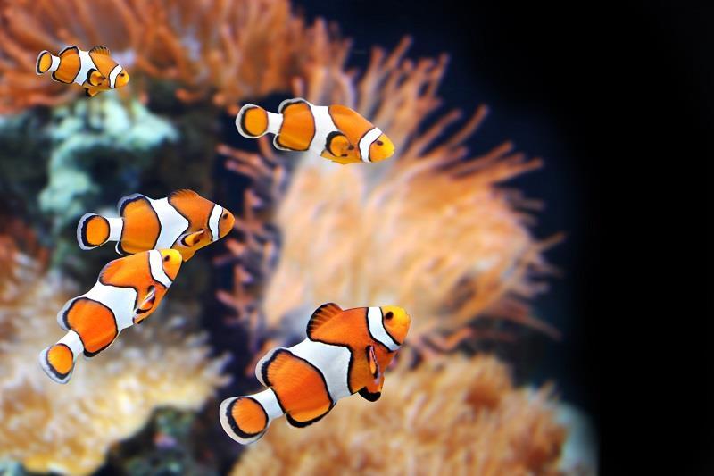 ماهیان دریایی یا آب شور (marine)