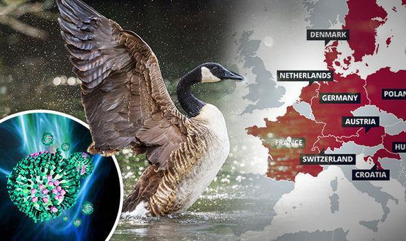 شیوع آنفلانزای مرغی در اروپا