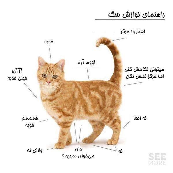 راهنمای نوازش گربه