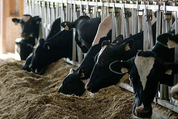 مطالعه اثرات زئولیت و بیکربنات سدیم روی شیر تولیدی و ترکیبات آن در گاو شیرده هلشتاین