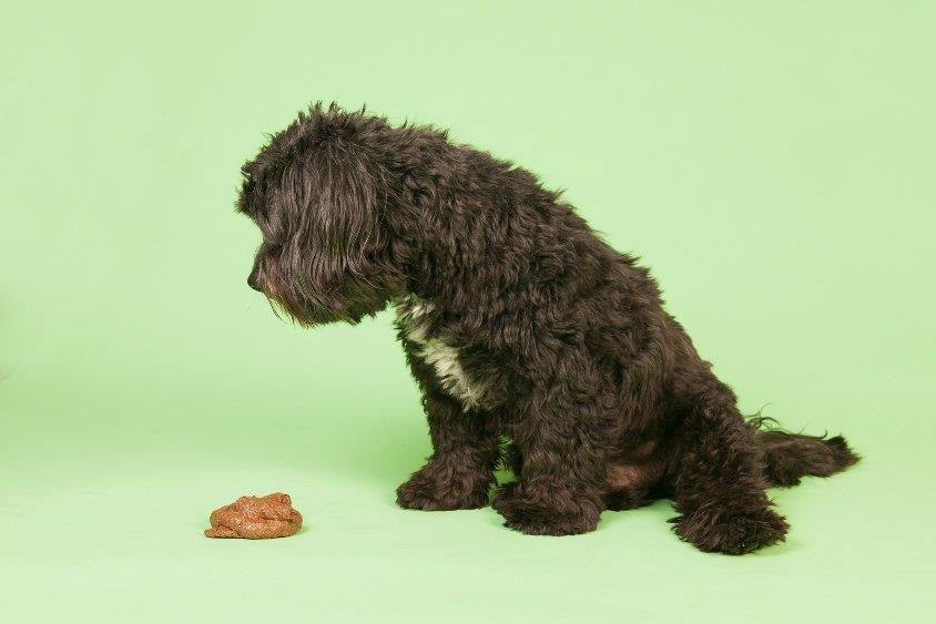 مدفوع سگ باید چه شکل و رنگی داشته باشد؟