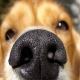 اسکن بینی حیوانات هویت واقعی آنها را رو می کند
