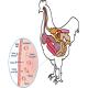 عوامل کلیدی در شکل گیری میکروبایوتای دستگاه گوارش مرغ