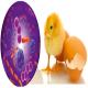 جمعیت میکروبی دستگاه گوارش سلامتی و بهره دهی مرغ ها