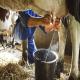 ژن های کاندیدا با تولید شیر و خصوصیات آن