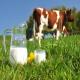 استفاده از دیدگاه ژن های کاندیدا و تکنیک های فناوری زیستی در افزایش و بهبود خصوصیات تولید شیر