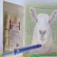 اسفنج کاشتنی گوسفندی ESPONJAVET