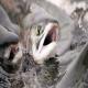 مدیریت تغذیه و کنترل کیفی استخرهای پرورش ماهیان گرمابی