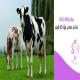 مکمل معدنی ویژه گاو شیری