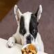 آیا سگ ها می توانند بیسکوئیت بخورند؟