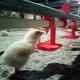 زیان ۵ میلیارد تومانی مرغداران در روز