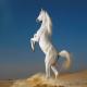 رفتارشناسی اسب