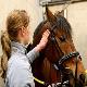 بیماری های مشترک انسان و اسب