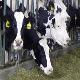 راه کارهای جلوگیری از اتلاف مواد خوراکی در مزارع گاو شیری