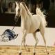 اسب های وارداتی میلیونی یا میلیاردی؟