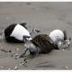 بوتولیسم در پرندگان