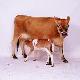 عوامل مولد کاهش آبستنی و سقط جنین در گاو