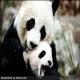 بیرحمترین مادران در میان حیوانات