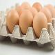 پروژه تولید تخم مرغ SPF افتتاح شد