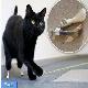 ساخت پاهای مصنوعی تیتانیومی برای یک گربه با استفاده از فناوری چاپ سهبعدی