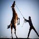 ورود اسبهای چینی به بازار ایران!