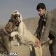 پایان جنگ سگ ها در زنجان